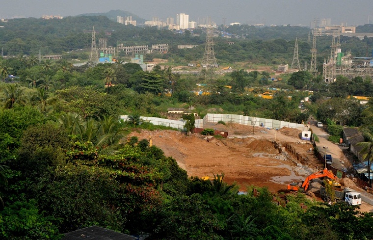 60 per cent of trees transplanted in Aarey Colony, Sanjay Gandhi National Park by MMRCL have died: Report