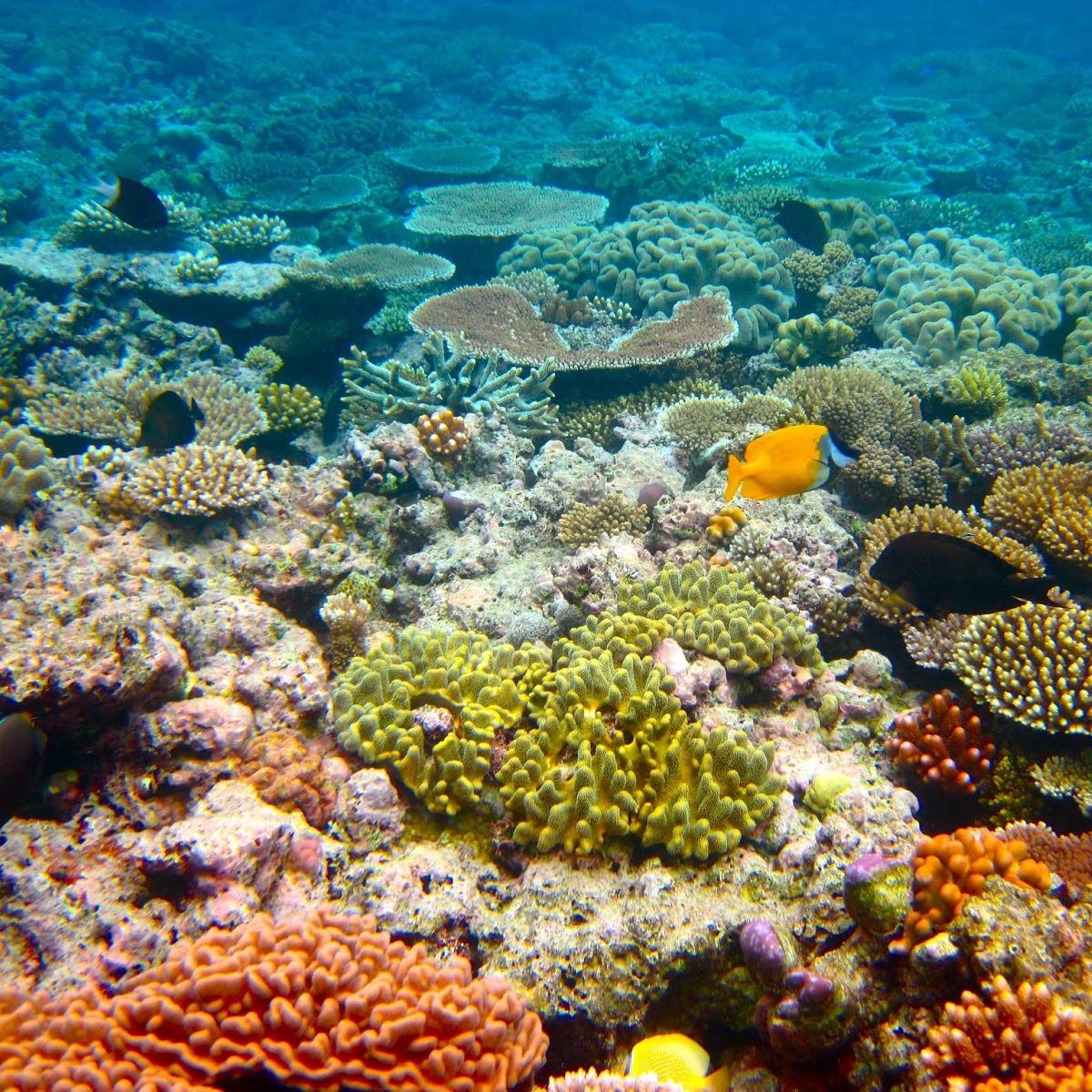 New disease hits coral reefs