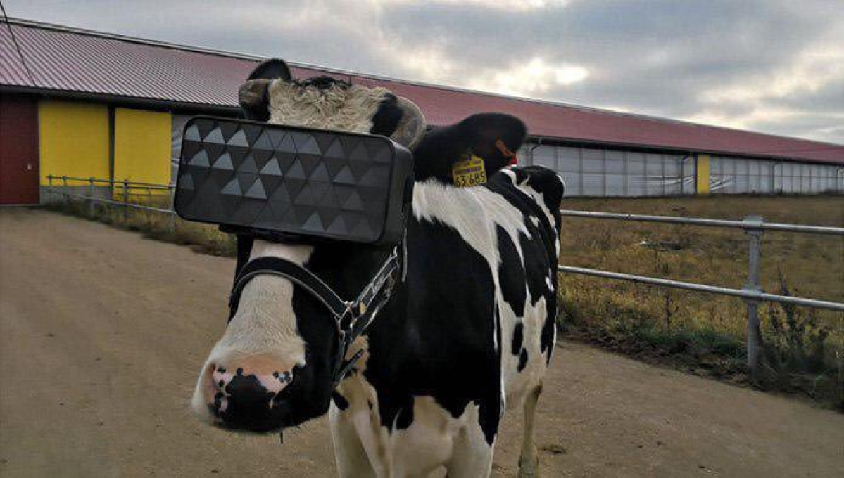 Literally the plot of the Matrix: Twitter udderly tickled by VR for cows