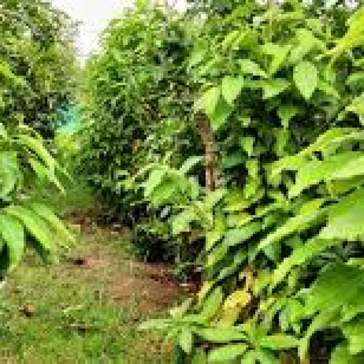 Mumbai: MMRC to go green with plantation of 9000 plants using Miyawaki method