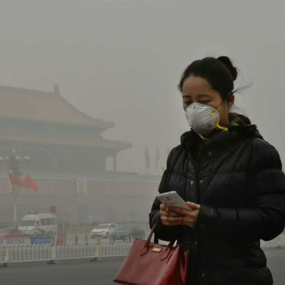 Air pollution linked to heart issues in humans, animals