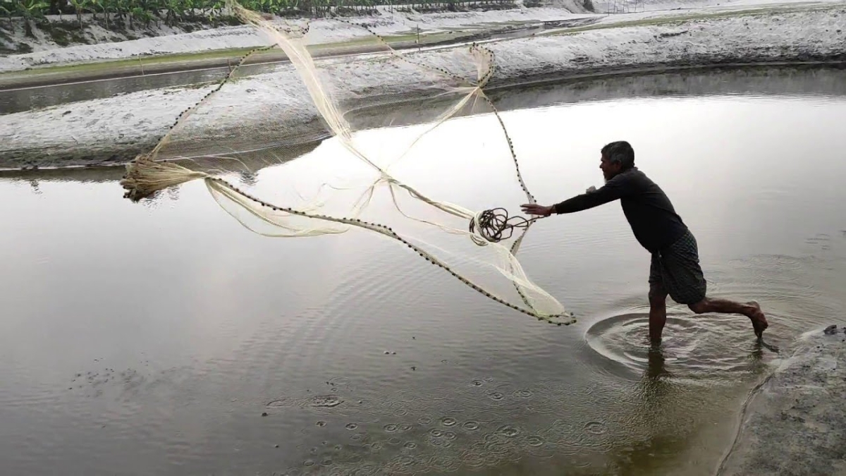 Lights on fishing nets save turtles, dolphins
