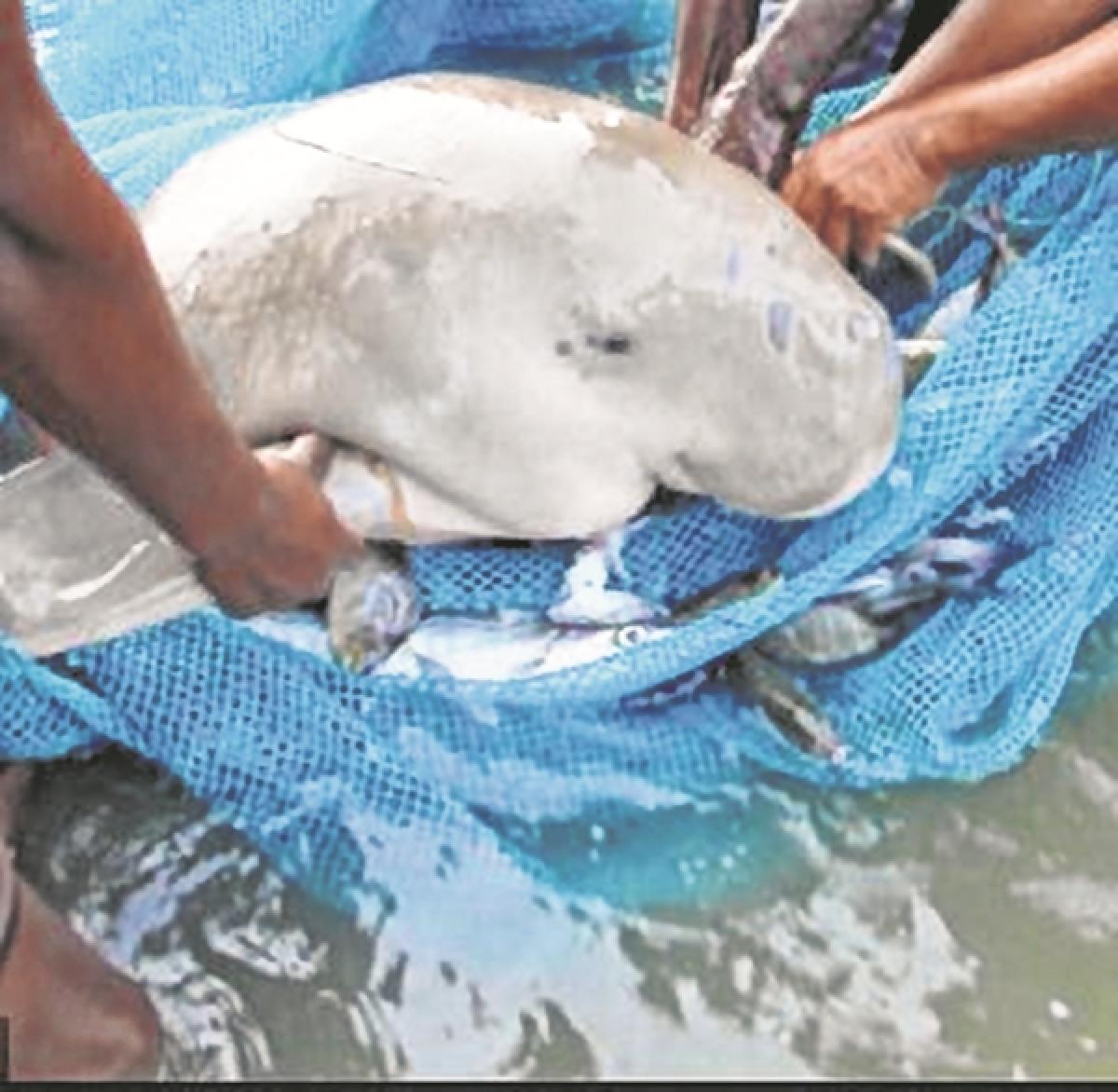 Mumbai: Fishermen net reward for saving endangered mammals