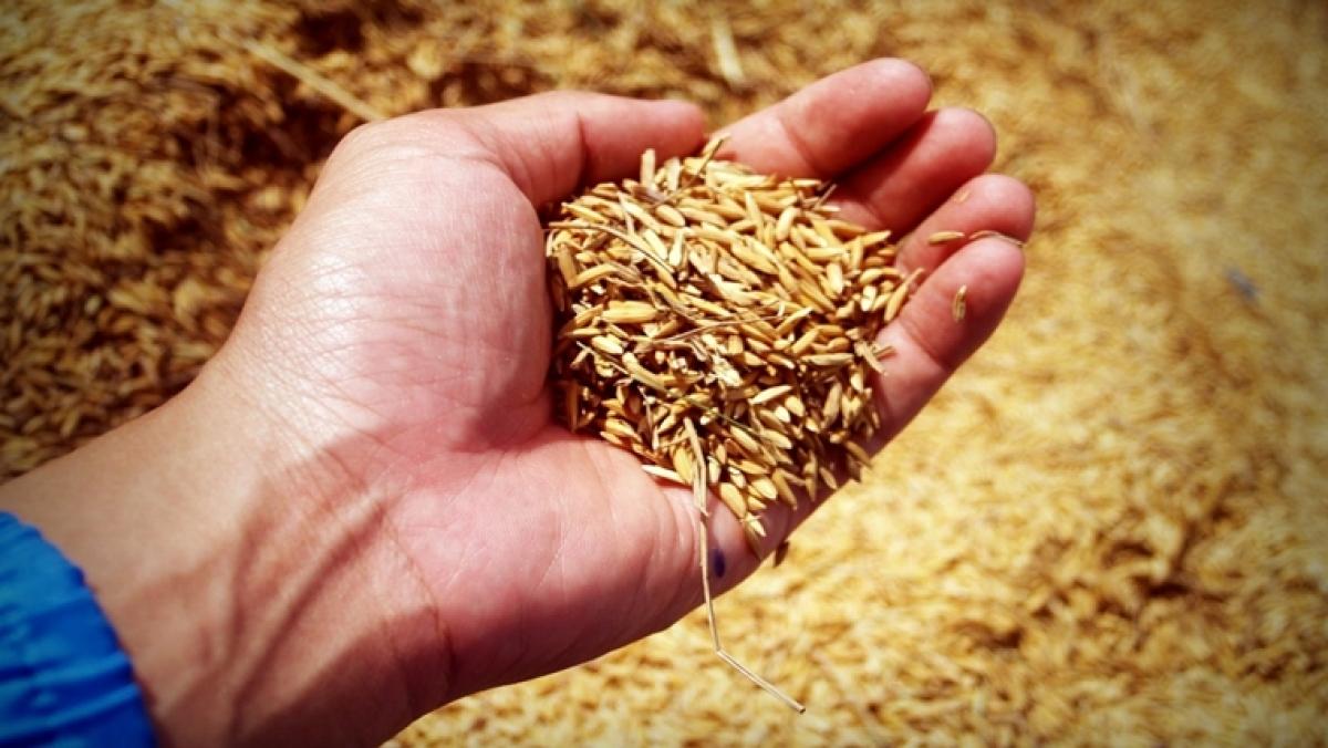 #Unlock1: Indore Municipal Corporation to stop free ration