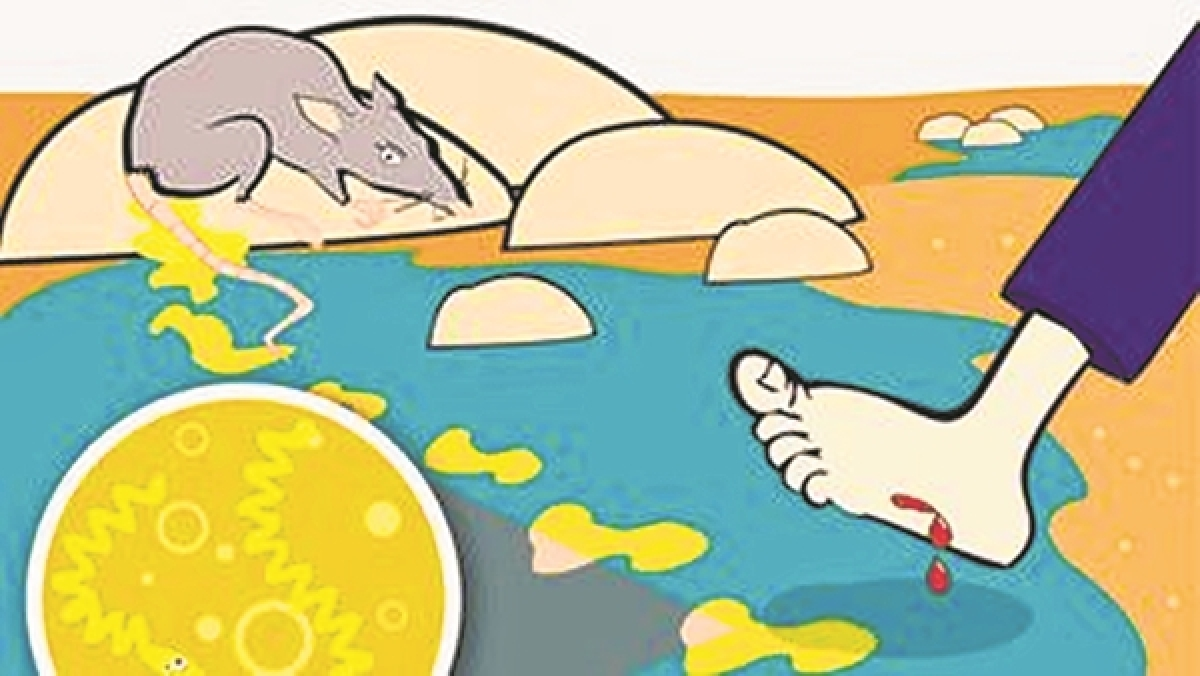 Lepto, dengue-like illness takes toll on city due to unseasonal rain