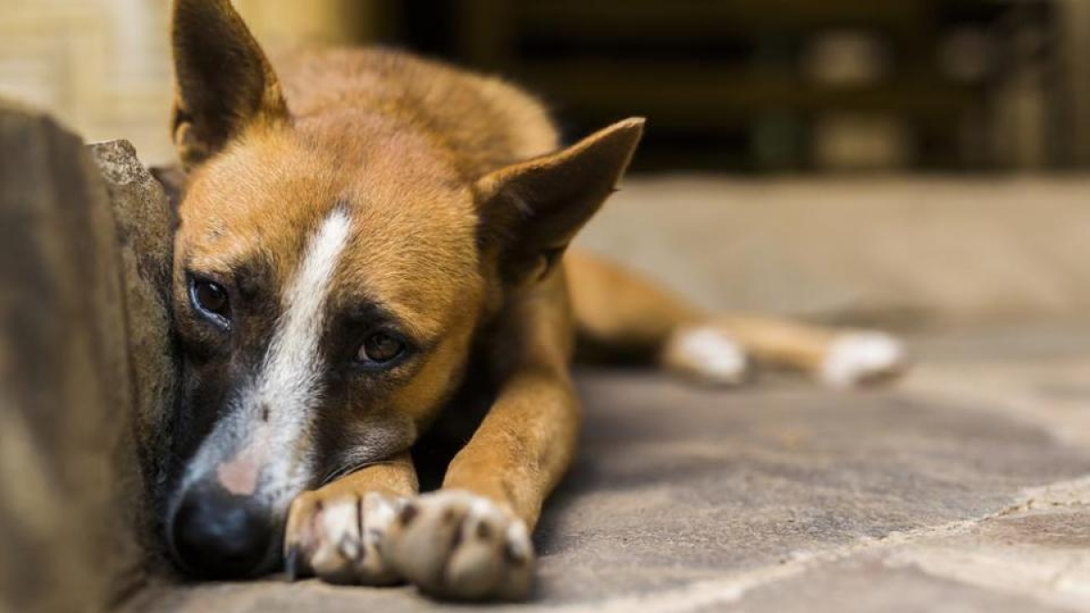 Strays can be fed from 5.30-7.30am every day: Police