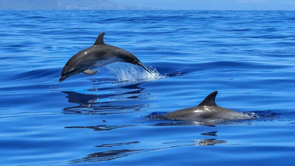 Mumbai: Six-foot long dolphin carcass washes ashore in Vasai