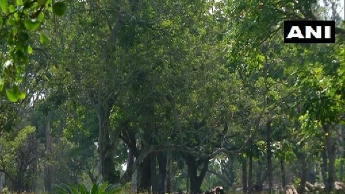 Bhopal: Forest of 1.20 lakh trees to be developed in TT Nagar area