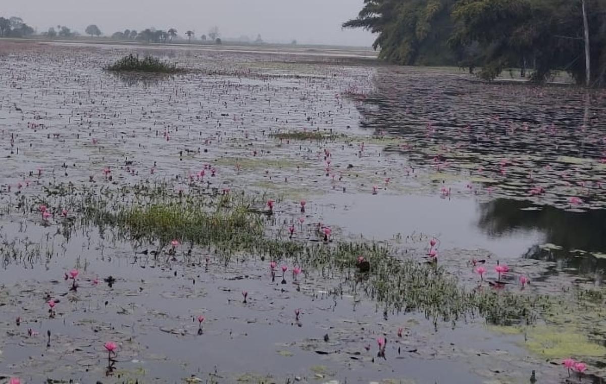 Gulawat's lotus valley