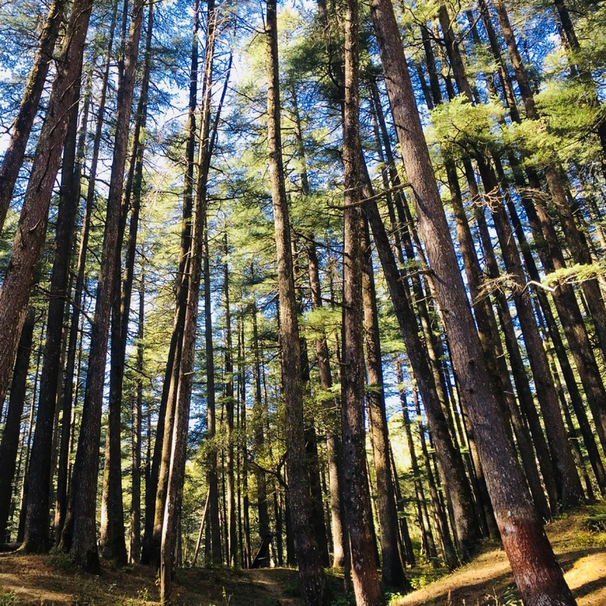 Madhya Pradesh: Over 100 injured as forest dwellers resist evacuation in Burhanpur