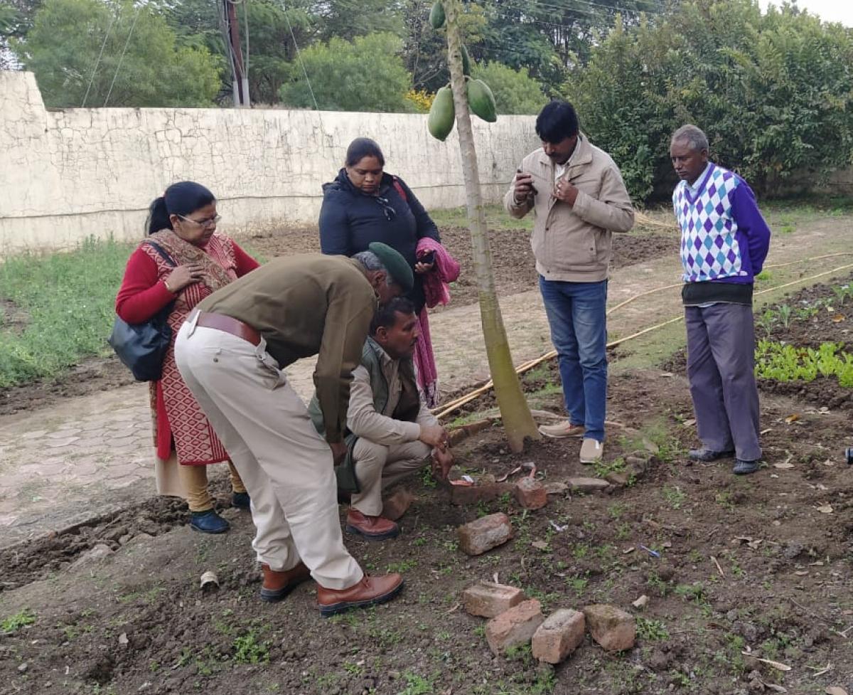 Bhopal: Tiger enters Bhoj University VC's residence