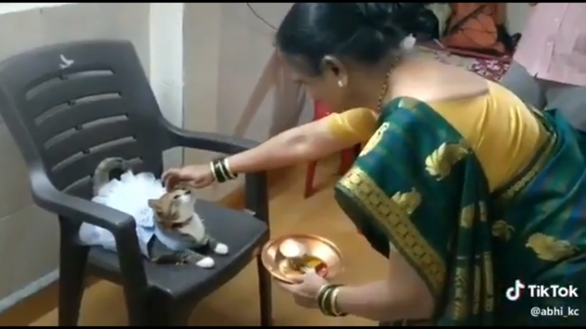 Watch: Viral video of woman applying tilak to cat wearing a frock
