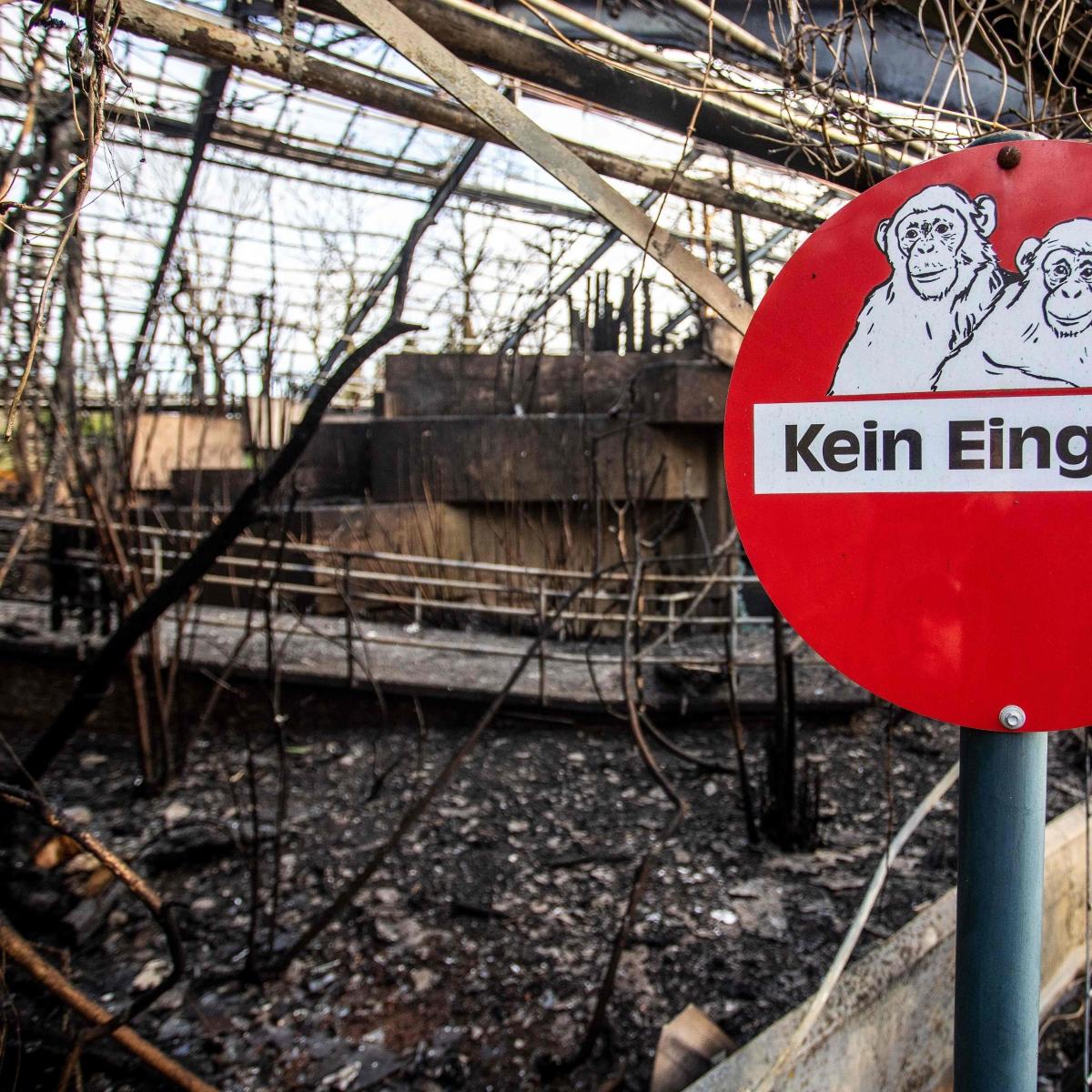 German zoo fire kills dozens of chimps, orangutans & gorillas