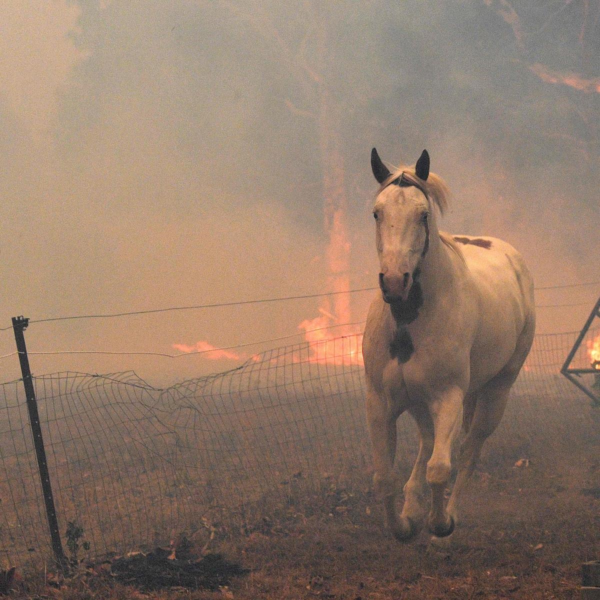 Oz fires: 7 dead, over 200 homes destroyed