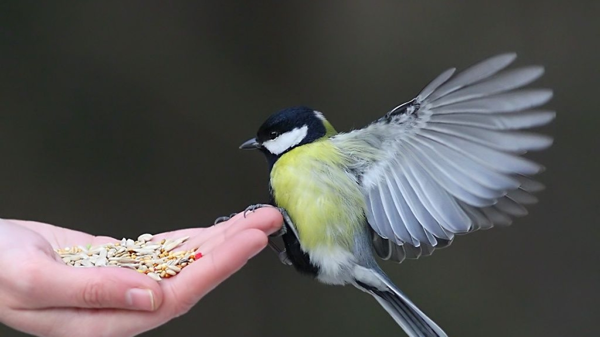 Birds too can make better food choices