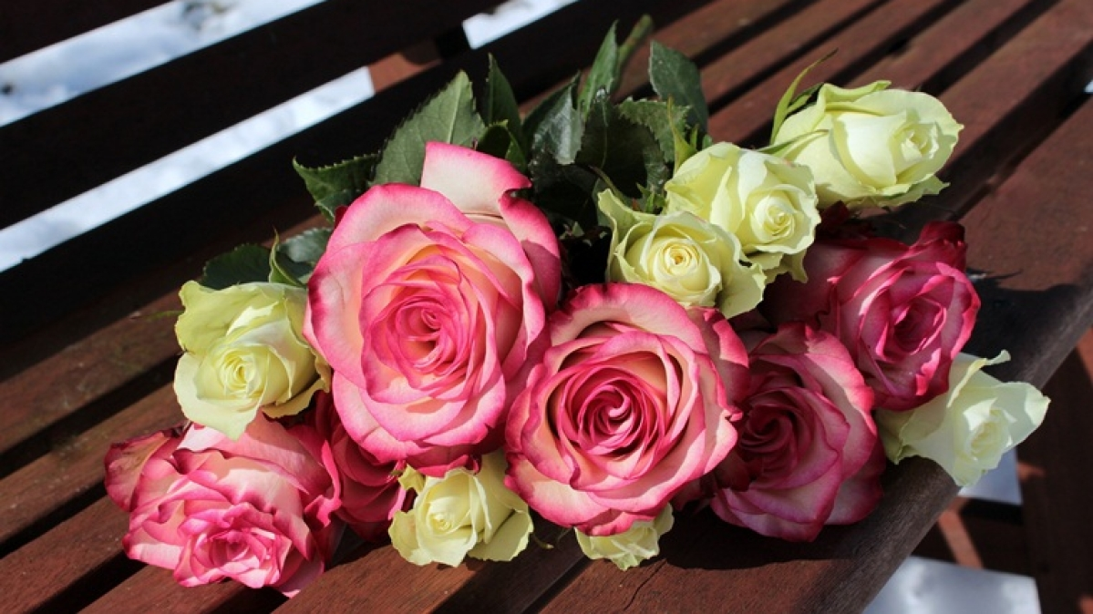 Happy Rose Day 2020: Wishes, messages to send on WhatsApp, Facebook and via SMS