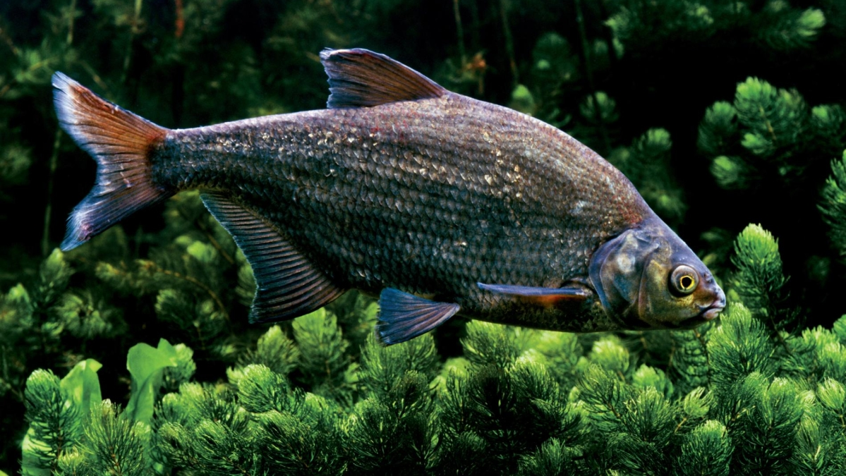 Fish can tell how to save the Amazon