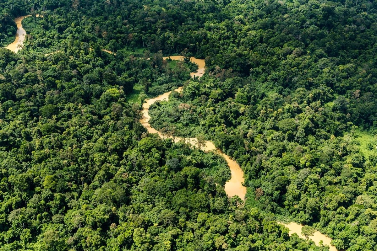 Madhya Pradesh's green canopy biggest, growing, says ISFR