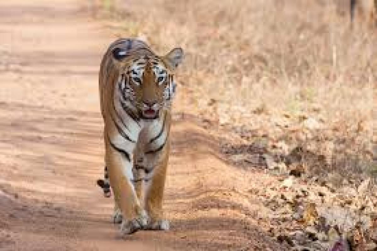 Aaditya Thackeray opposes mining near Tadoba-Andhari Tiger Reserve