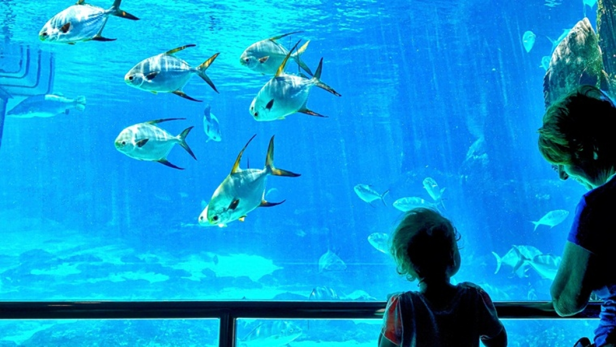 Maharashtra government plans to build a world-class aquarium on five-acre plot in Mumbai