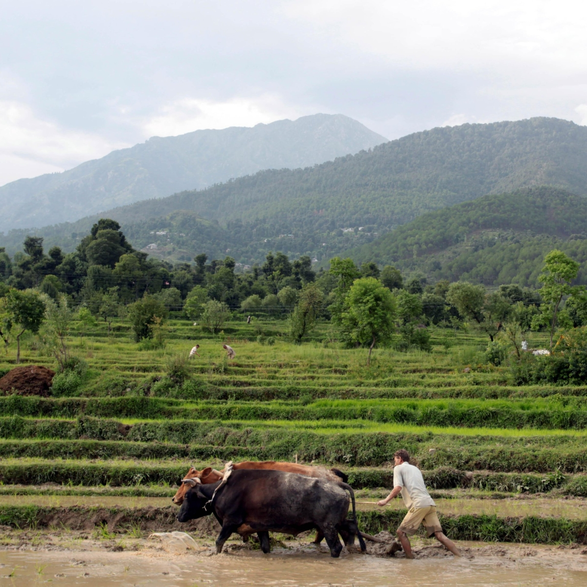Budget 2020: Positive outlook for farm, allied sectors