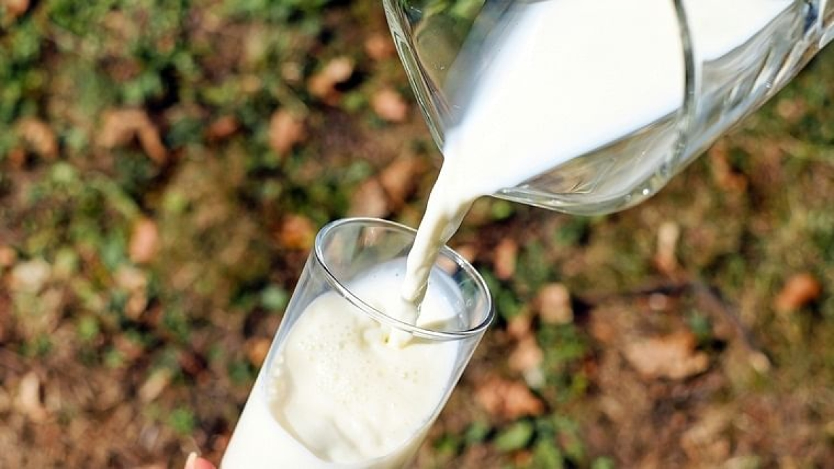 Shudh Ke Liye Yudhh: How safe is your milk? Dairy fed to conduct door-to-door Feb 15 in MP