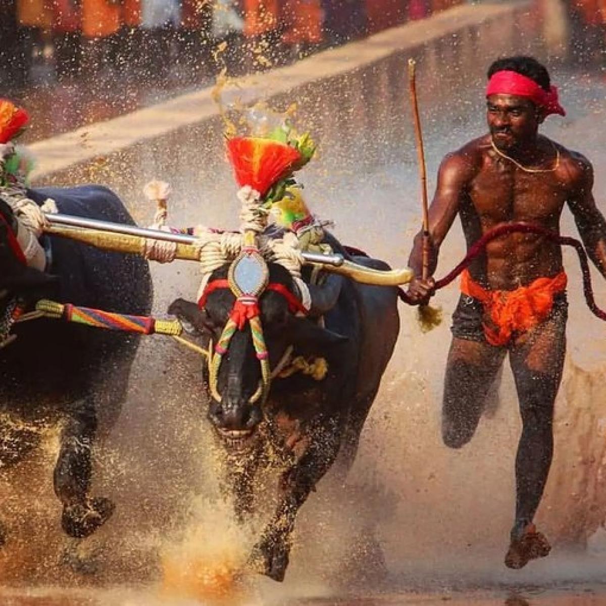 'Bolt is Bolt, Gowda is Gowda': Athletes urge caution amongst excitement over Karnataka buffalo jockey