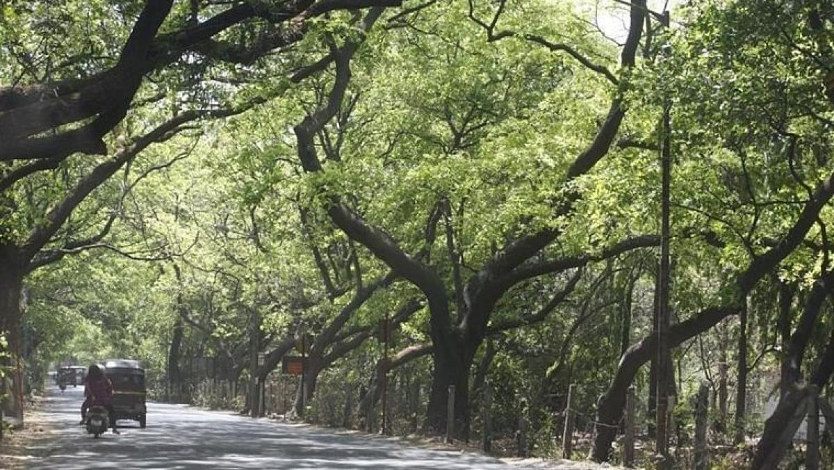 BMC to grow 4 lakh trees in Mumbai using Miyawaki