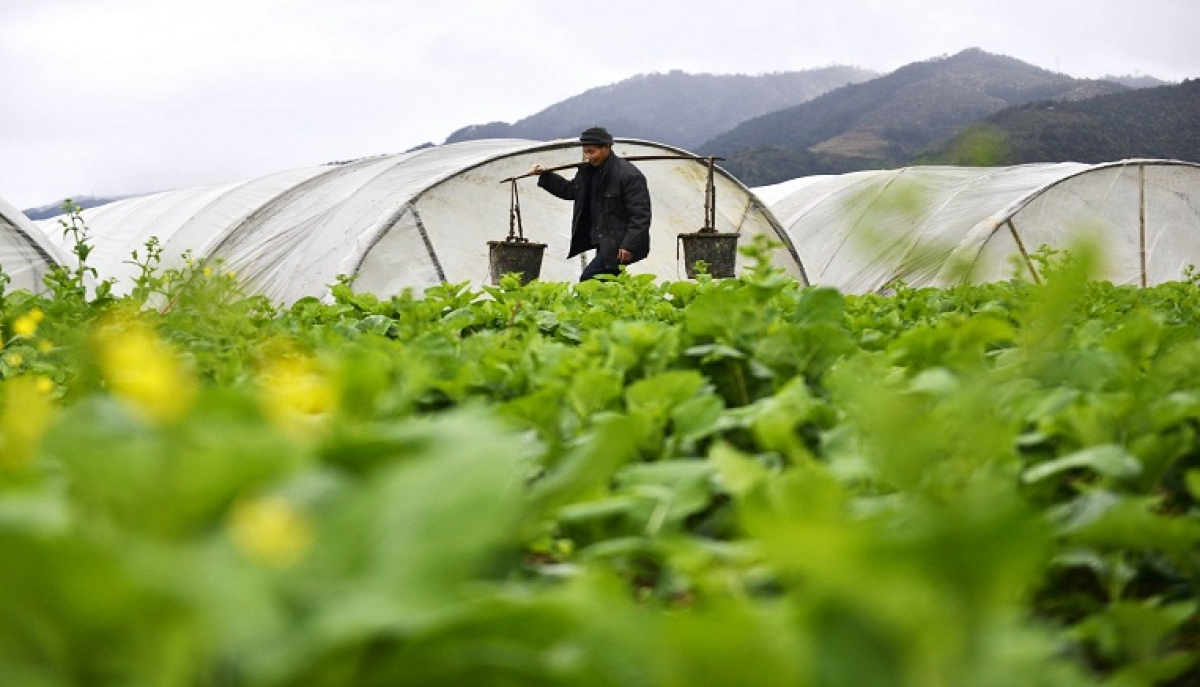 Across China: Agricultural sector quickens pace to go digital