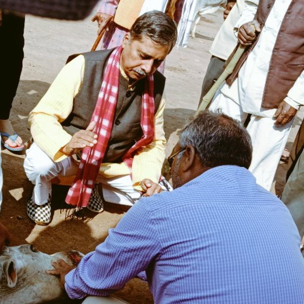 Madhya Pradesh: BJP MLA Pradeep Patel brings stray cattle to police station to counter Kamal Nath