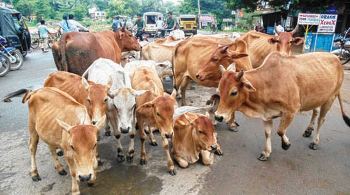 UP ropes in private firms to catch stray cattle