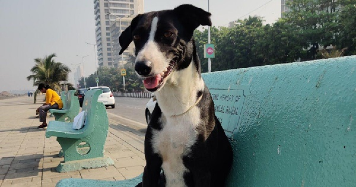 Coronavirus in Mumbai: Pet store owners concerned about new stock not arriving from warehouses
