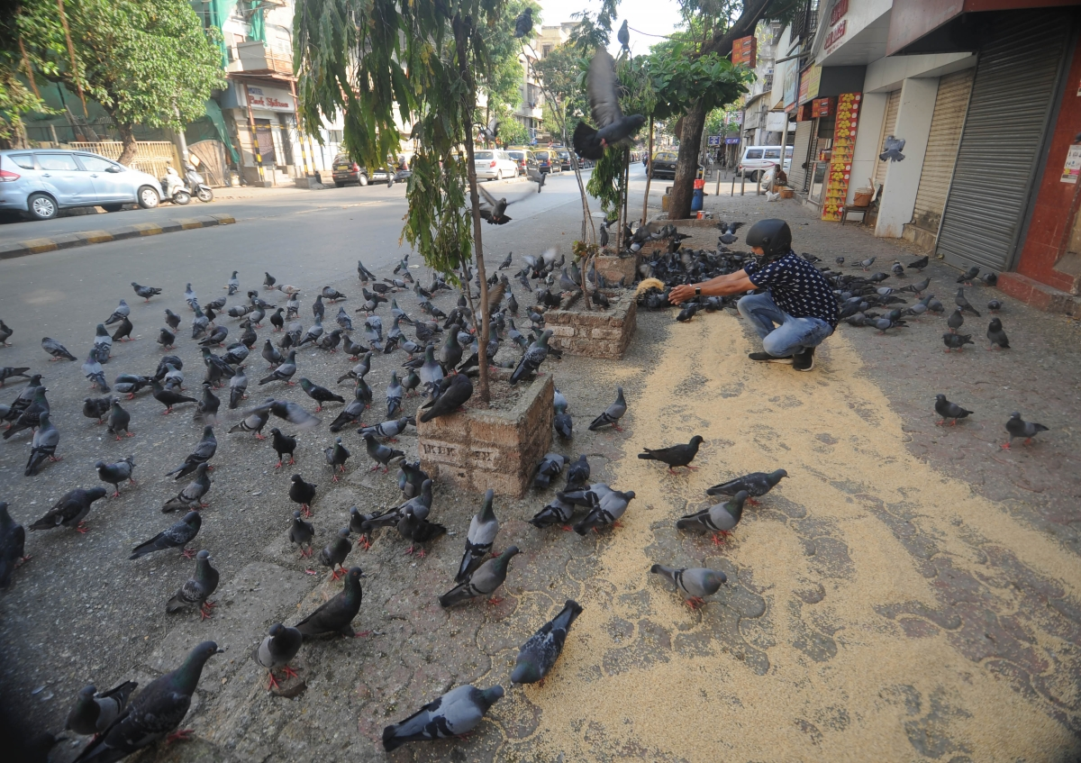 Man throwing pulses to feed pigeons.