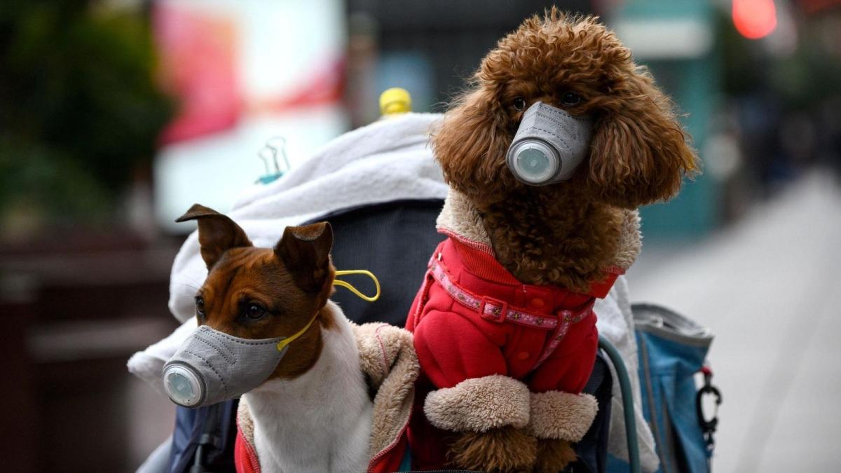Corona & care: Dogs, cats can't pass on coronavirus
