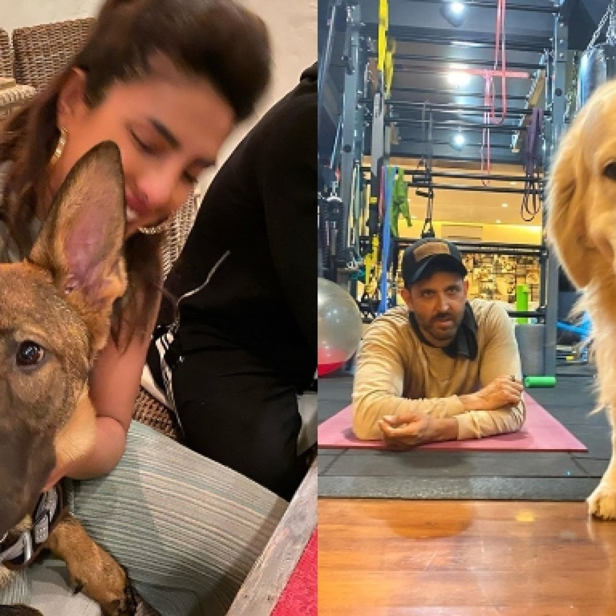 Quarantine diaries: Priyanka, Hrithik, Alia and other B-town spend quality time with their furry friends amid coronavirus lockdown