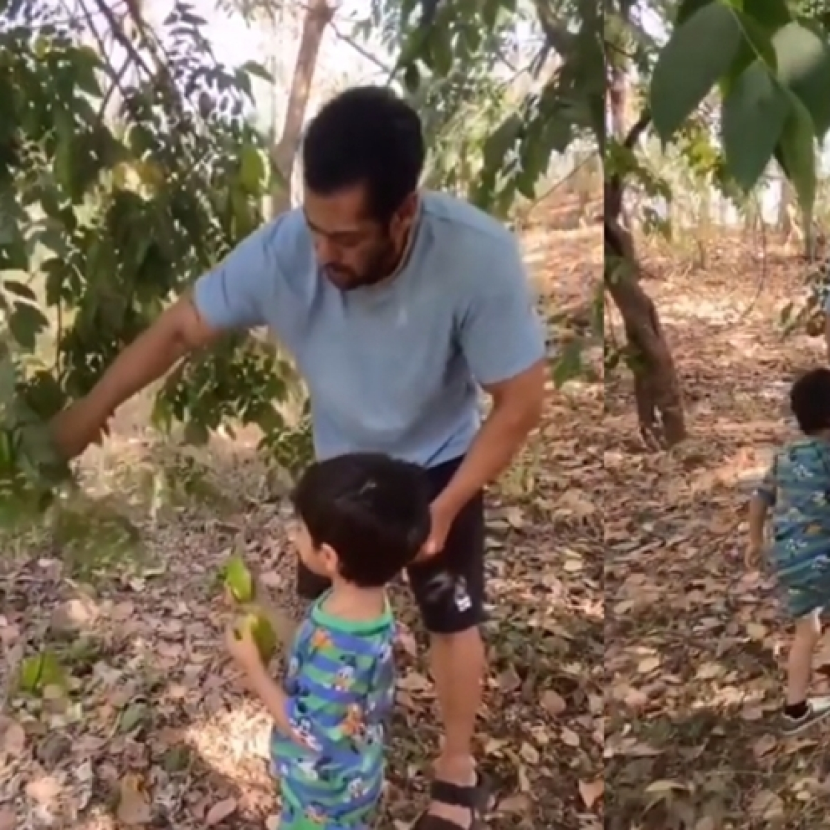 Watch: Salman Khan spends quality time with nephew Ahil as they pick fruits at his Panvel farmhouse
