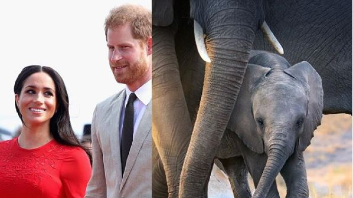 Meghan Markle back to showbiz as narrator of Disneynature documentary 'Elephants'