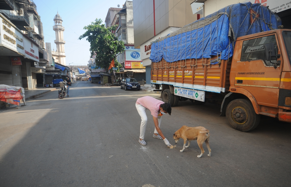 A boy feeds a strey dog.