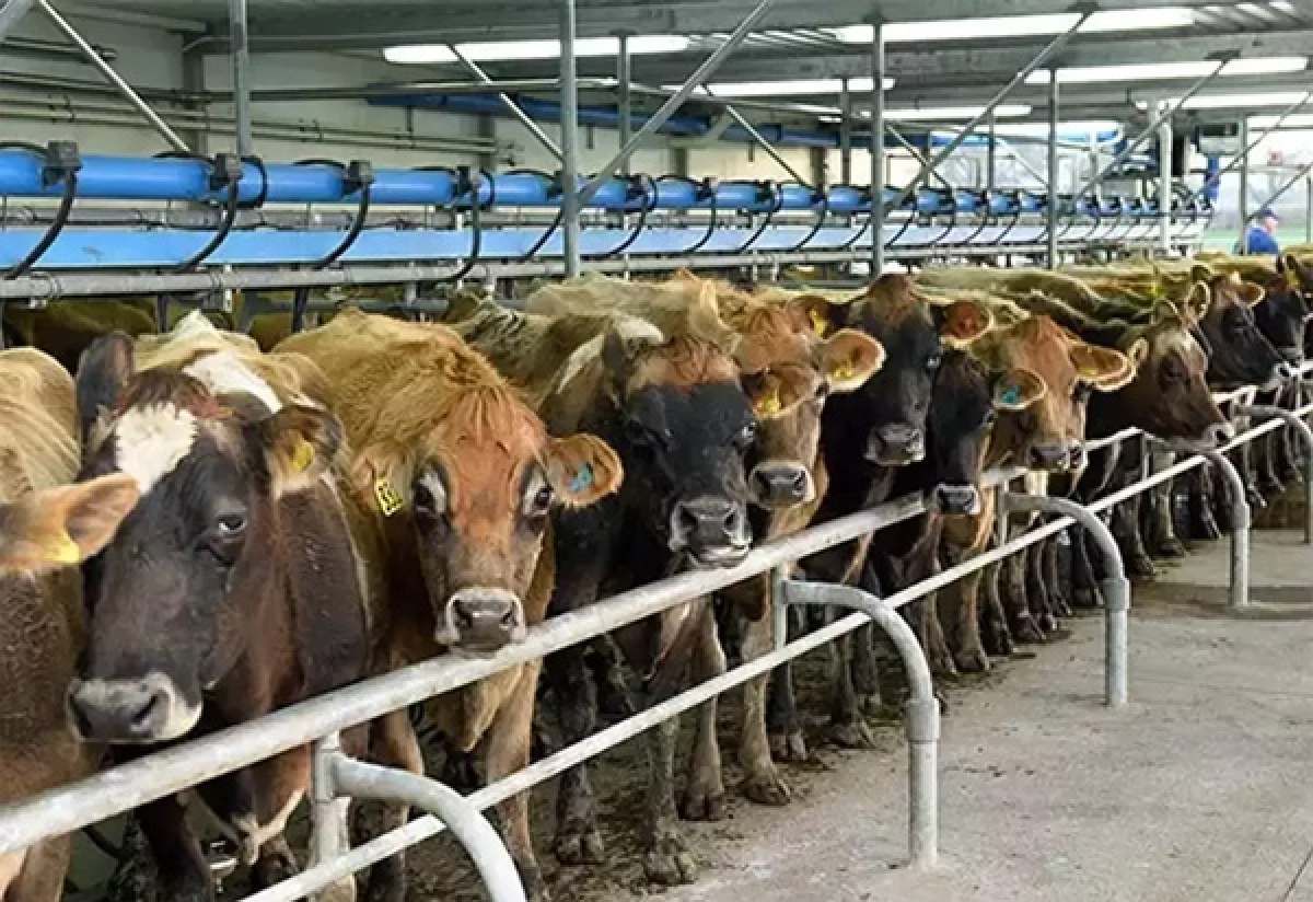 Livestock being ignored during lockdown
