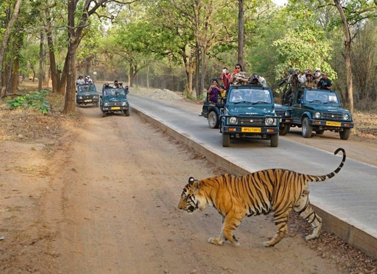 Madhya Pradesh: CM Shivraj, Chief secretary hold meeting on Forests in Bandhavgarh