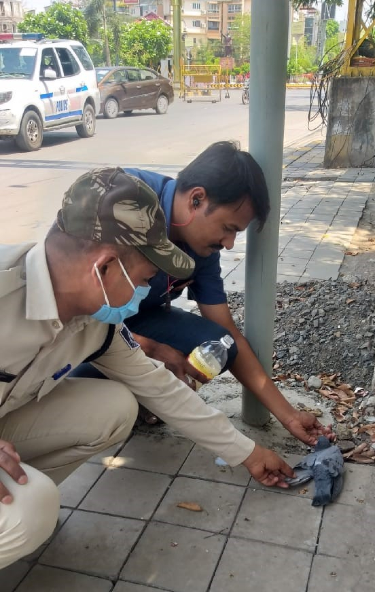 Indore: Police constable saves pigeon dying from thirst