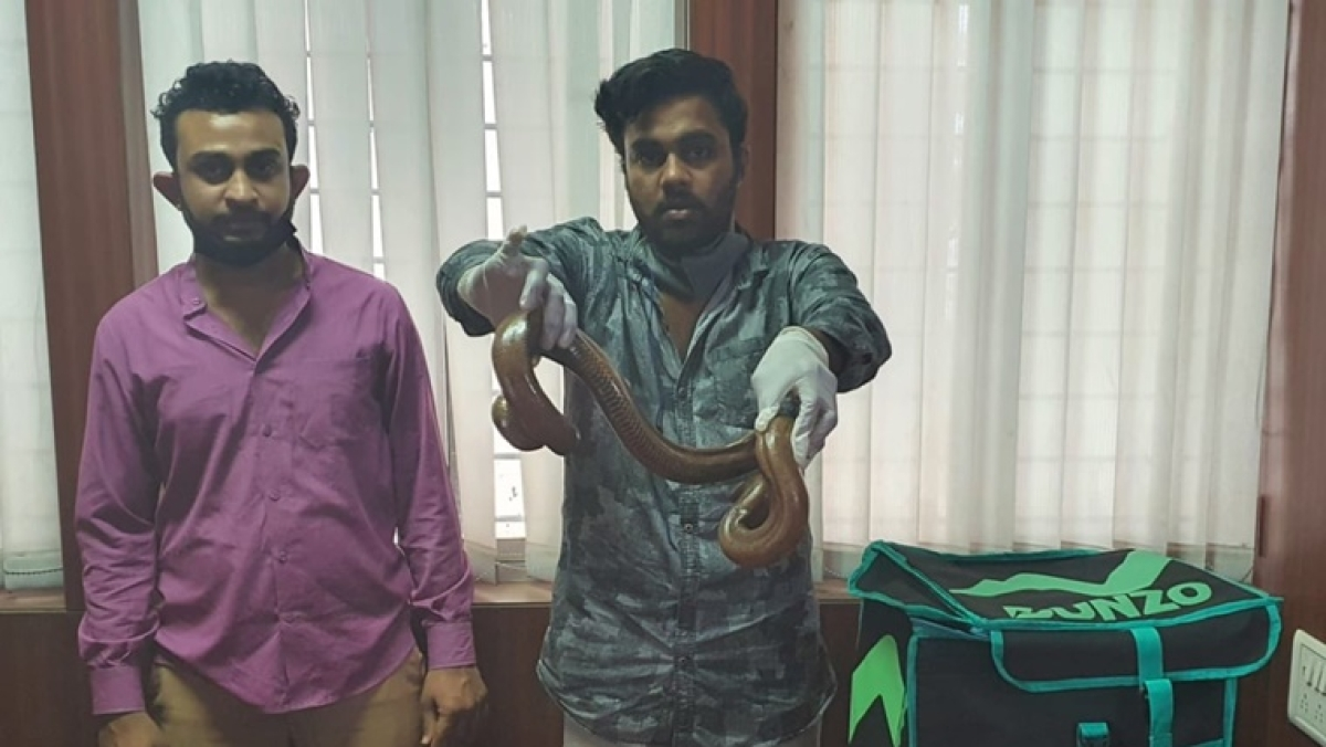 Bengaluru Crime Branch arrests two for trying to sell a two-headed snake