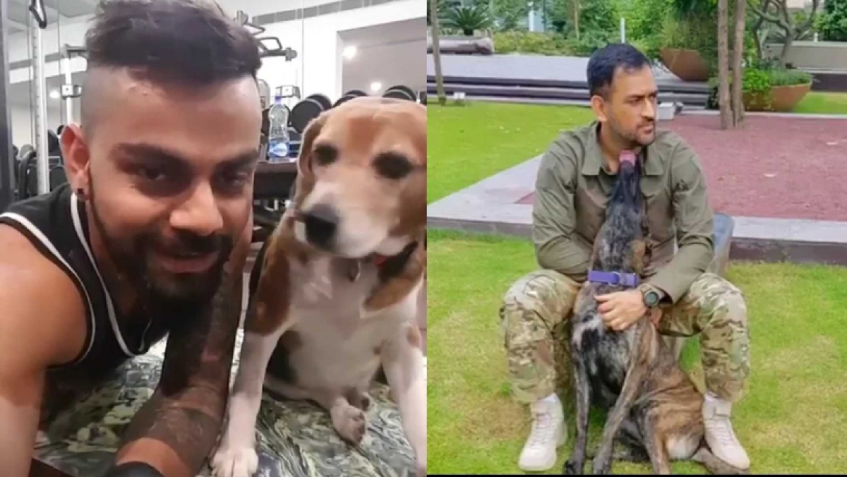 Cricketers with Doggos: These adorable Pet Day pics of Kohli, Dhoni and Co will lift your bad mood