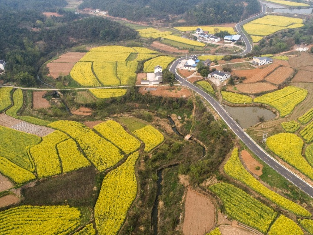 Hubei's farm produce gets rural cooperatives' thrust