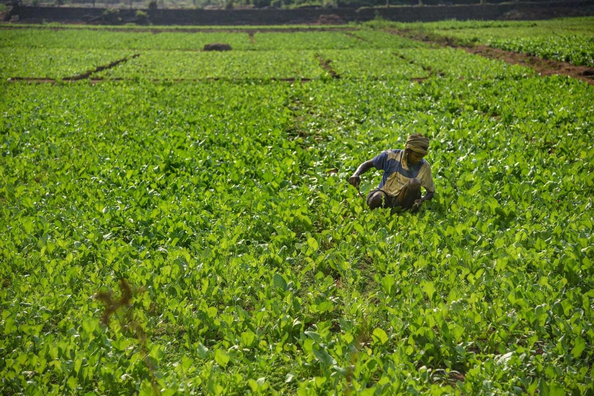 A farmer tends to his crops amid the lockdown in Navi Mumbai