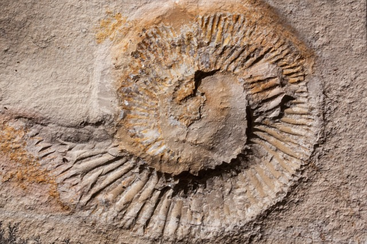 Ancient marine life fossils on pavements add beauty to central China heritage