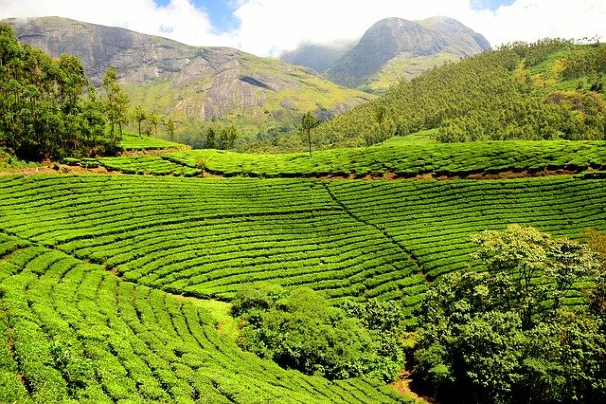 Sri Lanka's oldest tea auction moves online due to coronavirus pandemic