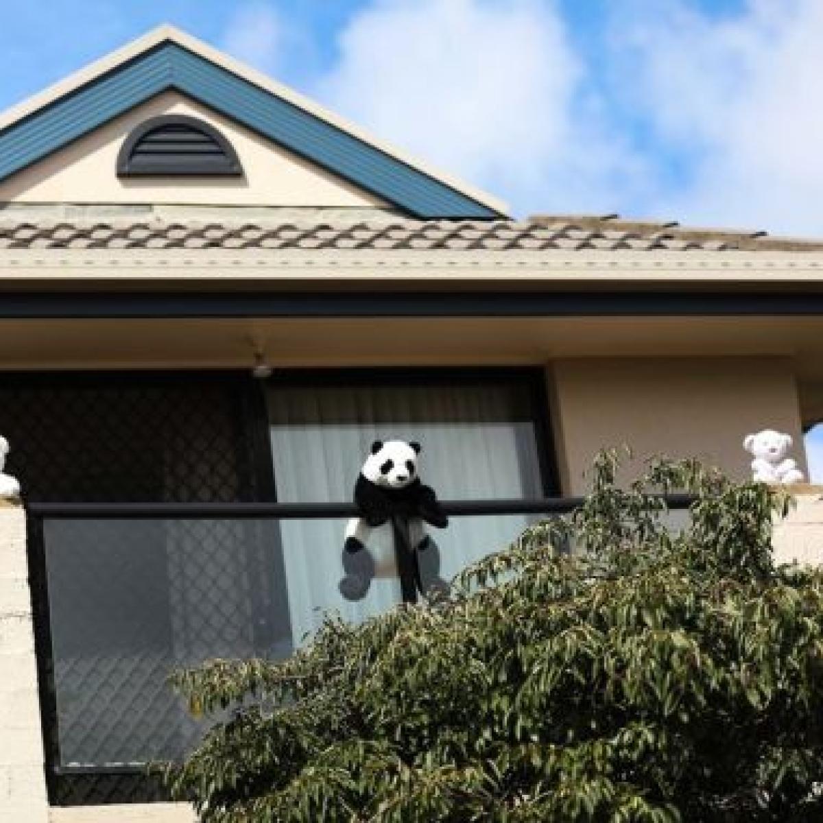 How people are cheered in New Zealand amid coronavirus lockdown