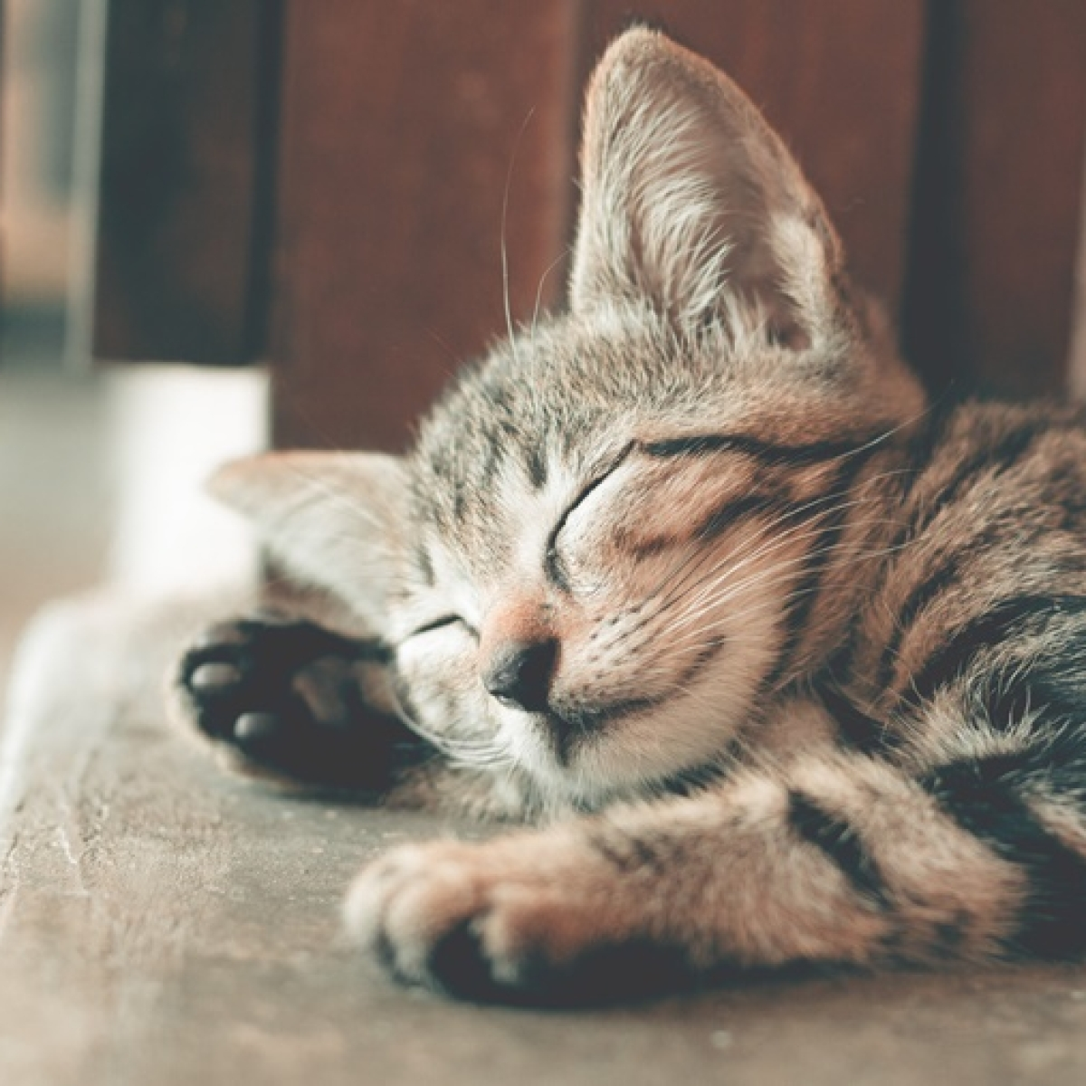 2 cats in New York become first US pets to test positive for coronavirus