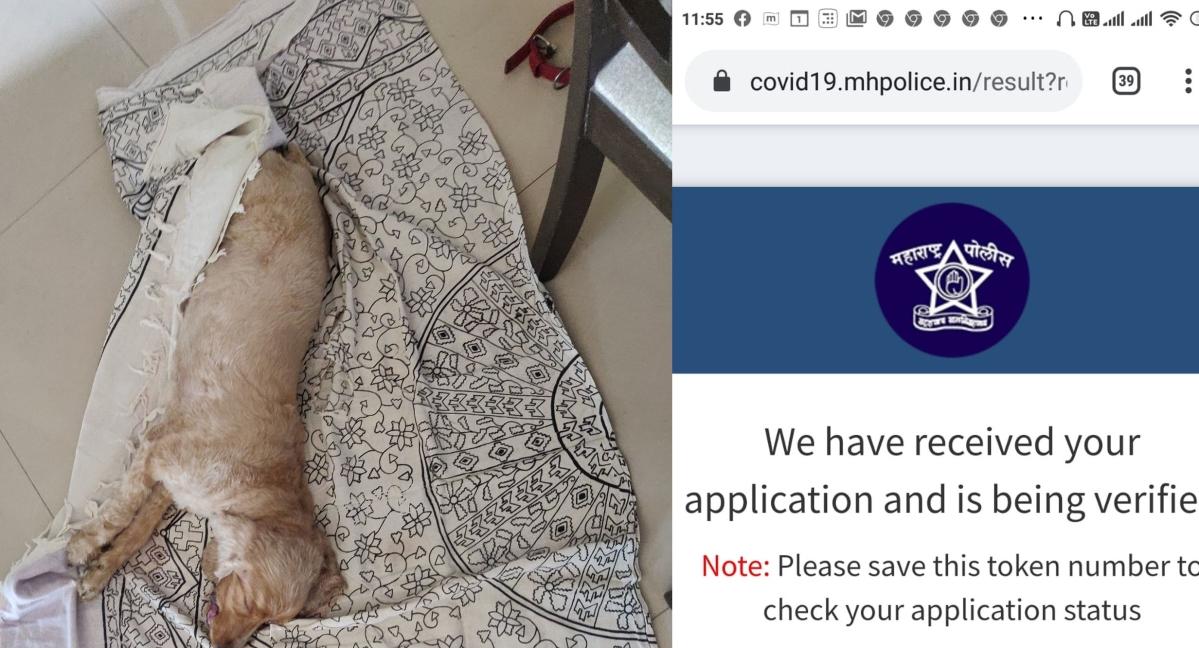 Coronavirus in Navi Mumbai: Good boy Joey passes away after police deny his human pass to visit vet
